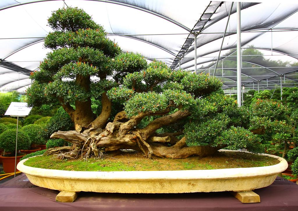 hortikultura.mk_bonsai 3