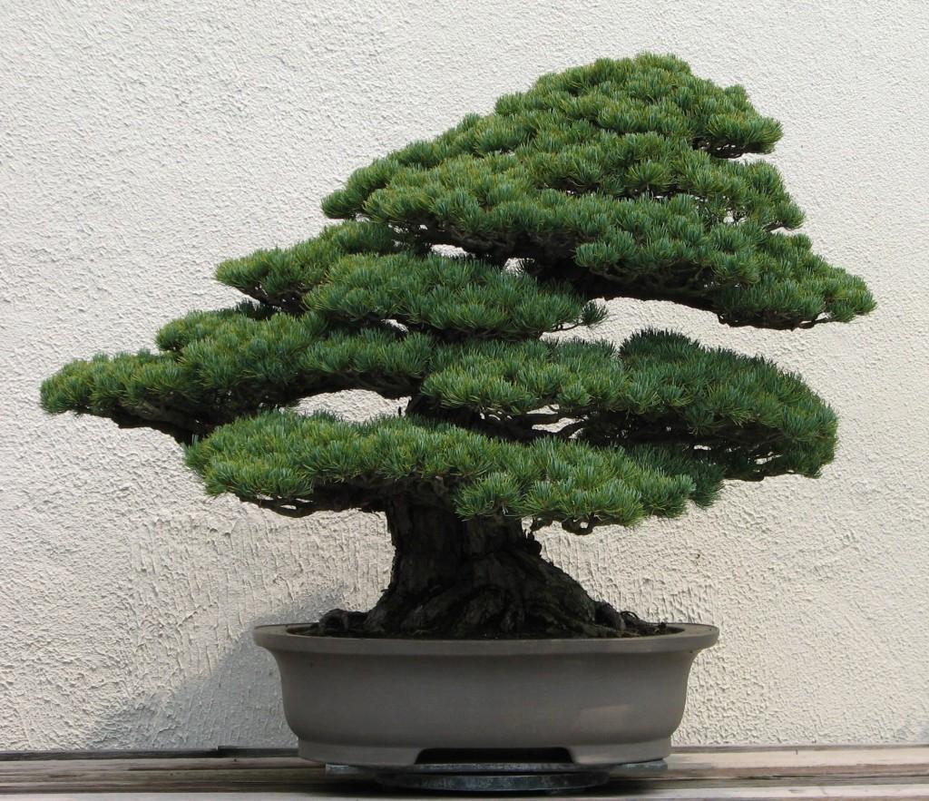 hortikultura.mk_bonsai 4