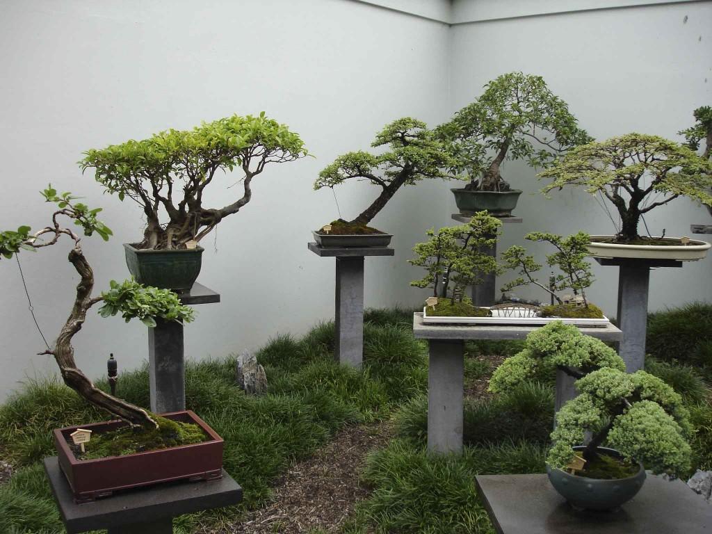 hortikultura.mk_bonsai 5