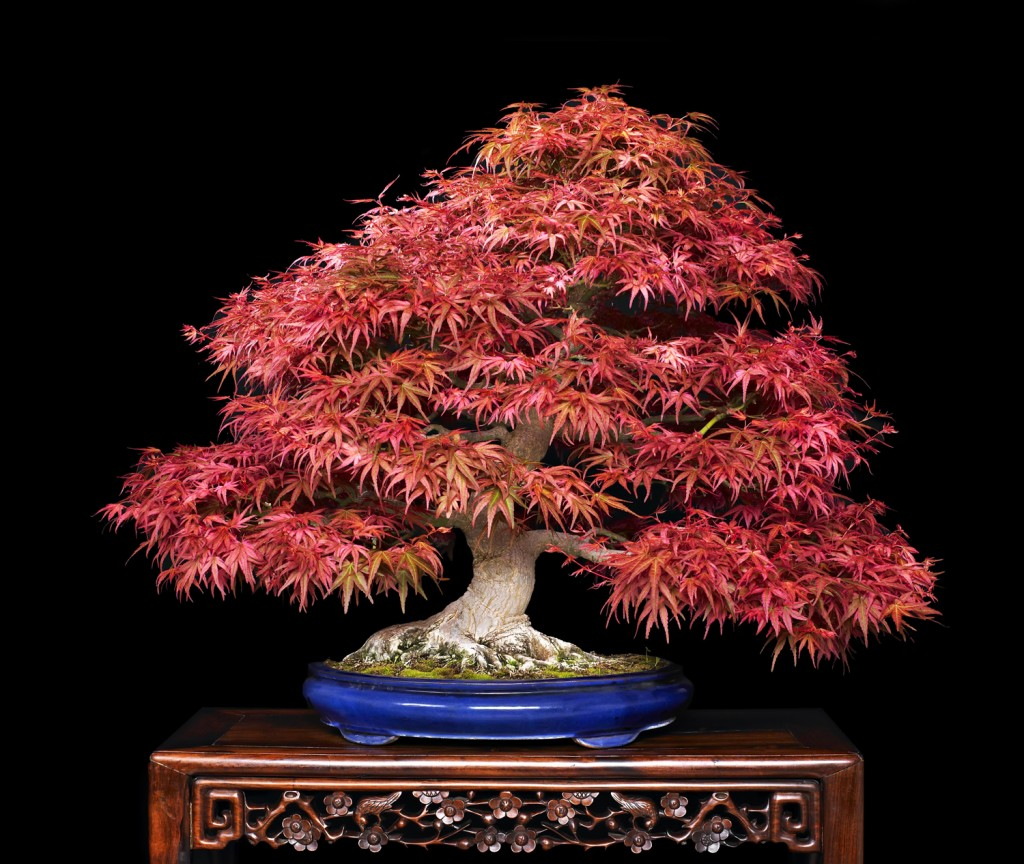 hortikultura.mk_bonsai 6
