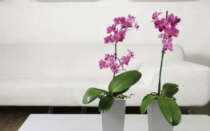 Мини собни растенија за поубав дом