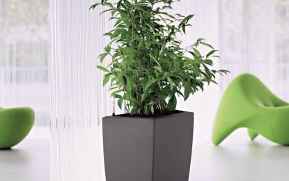 Топ 10 правила за одгледување на собни билки