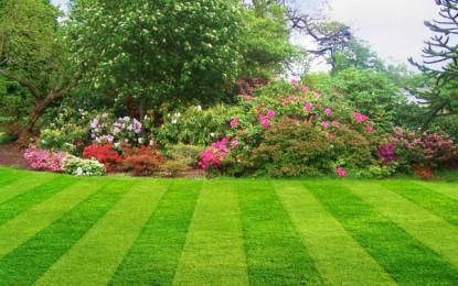 Подигнување на нов тревник (сеидба)