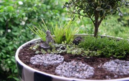Како да си направите минијатурна градина во својот дом?