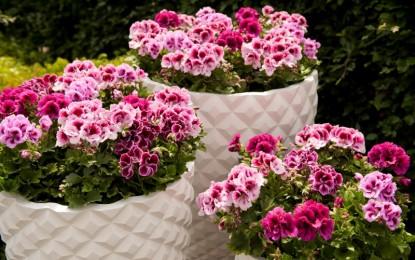 Како да се подготвите за одгледување на сардела во зимски услови?