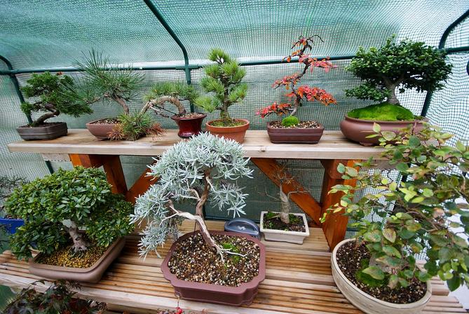hortikultura.mk_zastita_na_bonsai_vo_zima_1