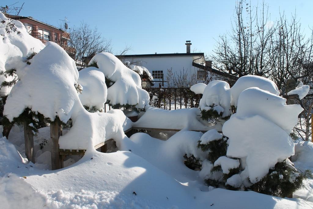 hortikultura.mk_zastita_na_bonsai_vo_zima_3