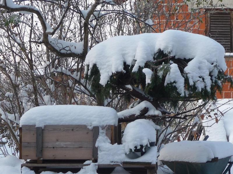 hortikultura.mk_zastita_na_bonsai_vo_zima_4