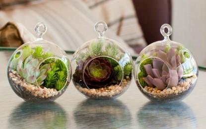 Како се одгледуваат мини кактуси ?