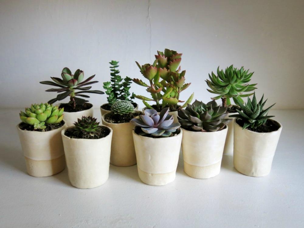 hortikultura.mk_mini_kaktusi_2