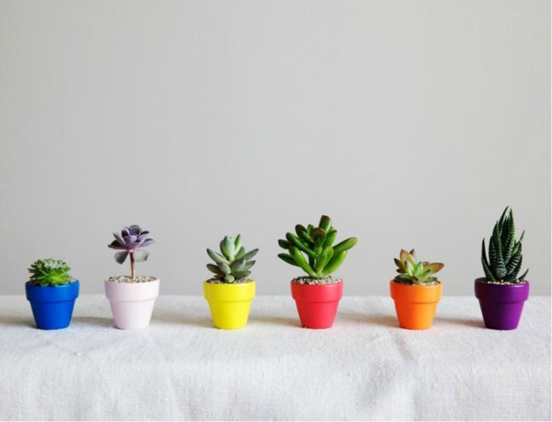 hortikultura.mk_mini_kaktusi_3