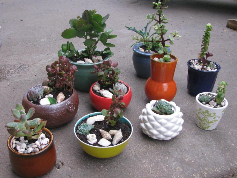 hortikultura.mk_mini_kaktusi_8