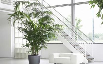 Растенијата не поднесуваат сув воздух