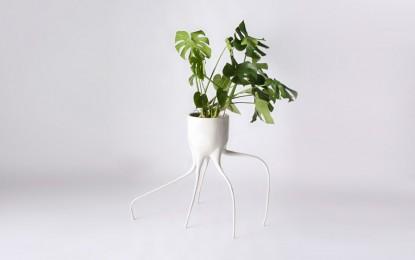 Уникатни саксии во форма на корен