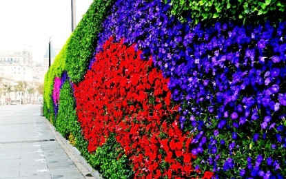 Цветни ѕидови: Тренд во светот