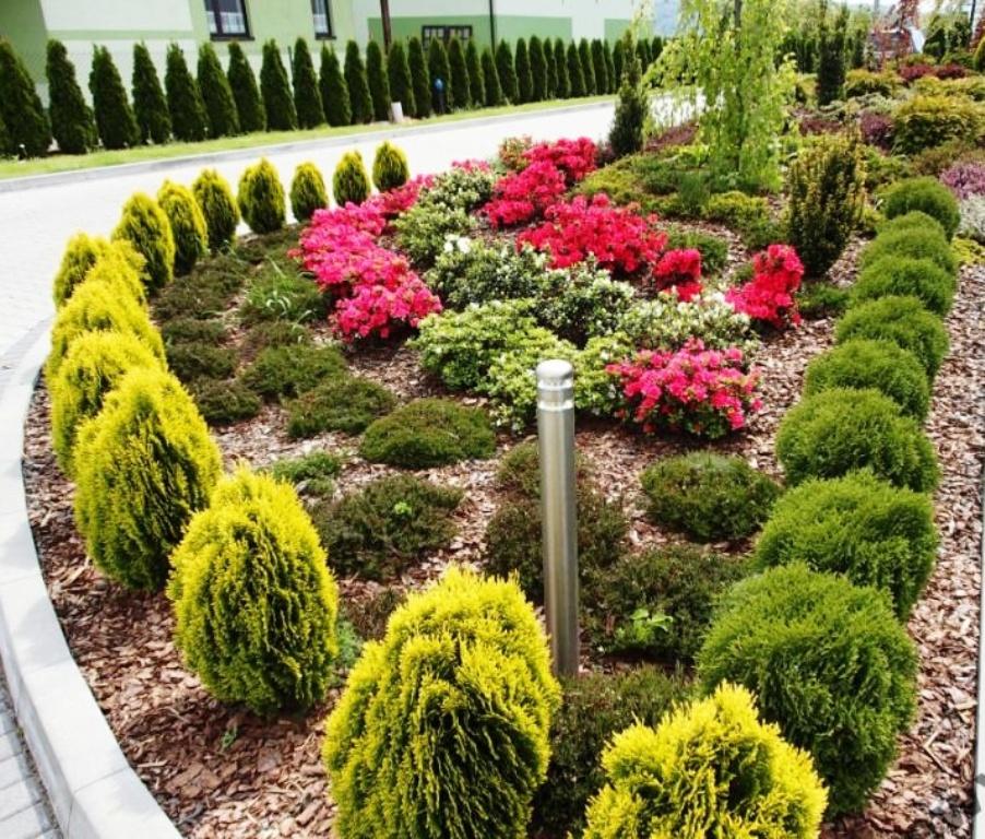 hortikultura.mk_thuja_orientalis_aurea_nana_4