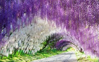 Најубавиот цветен парк во Јапонија