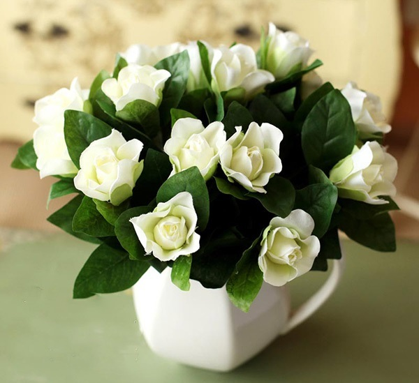 hortikultura.mk_gardenia_5
