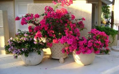 Цветни аранжмани за мали балкони