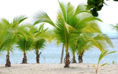КОКОС – Кралицата на палмите