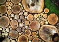 НАПРАВИ САМ: Направете патека во градината од дрвени трупци