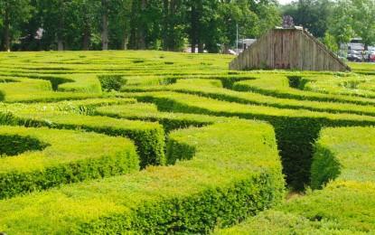 Најубав украс во градината: како се сади жива ограда