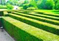 Како правилно се одржува живата ограда