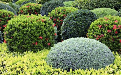 Есента – идеален период за размножување на декоративните грмушки