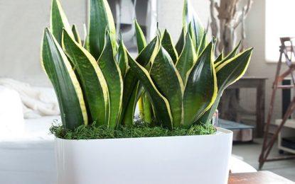Растенија кои одлично успеваат во темни простории