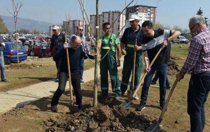 Пролетна акција за садење на 100 дрвја во Општина Аеродром