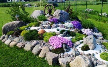 Алпинетум │ Каменеста градина со цветен колорит