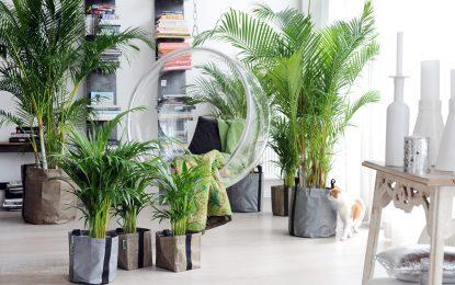 6 растенија кои се бели дробови на нашиот дом