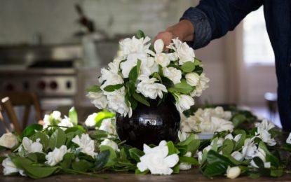 8 видови на цвеќиња со кои ќе уживате во летото