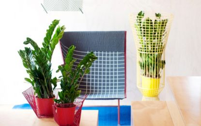 Замија | цвеќе за декорирање на домот и канцеларија