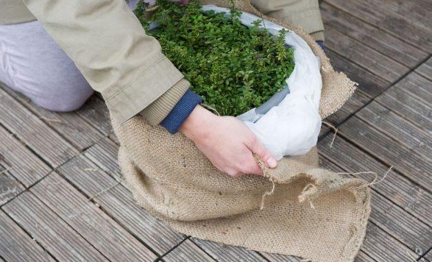 5 начини да ги заштитите растенијата од мраз