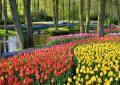 Кеукенхоф │ Најубавата пролетна градина во светот