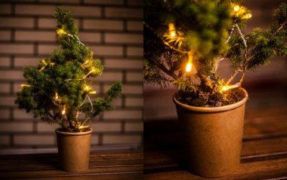 Мини бор │ Мала божиќна елка!