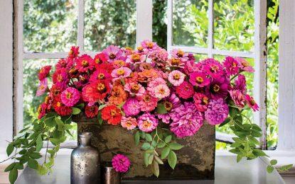 Цинија: Цвеќе за шарени градини