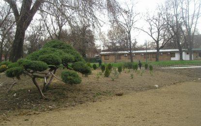Хортикултурно уредување на зеленилото во Градски Парк во Скопје
