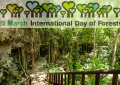 Денеска е 21 Март – Меѓународен ден на шумите