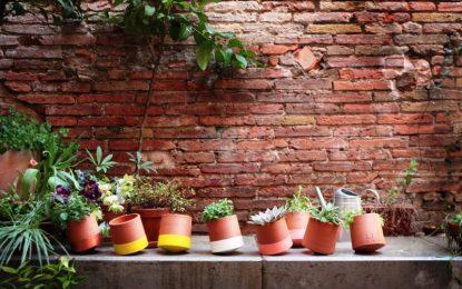 Иновативни саксии кои ротираат како сончогледот