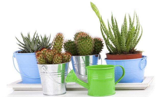 Ако сеуште не сте, тогаш крајно време е да ги внесете кактусите во домот!